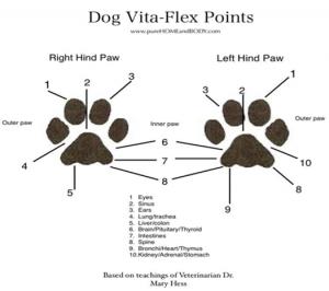 DOG REFLEXOLOGY